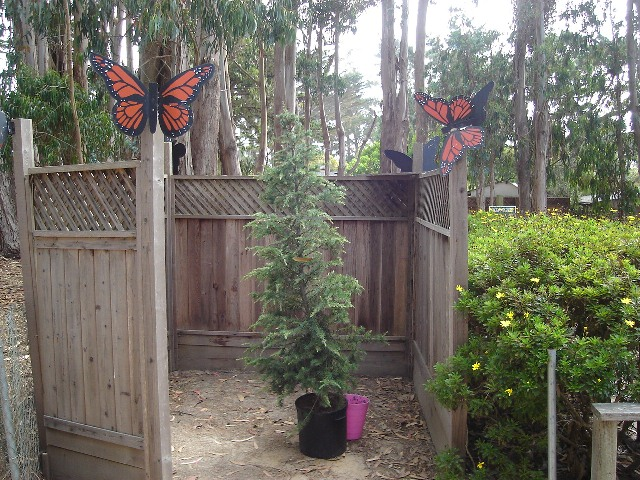 Butterfly Trees Stand In