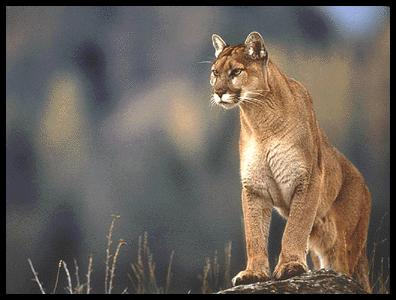 Cougar PC 180720