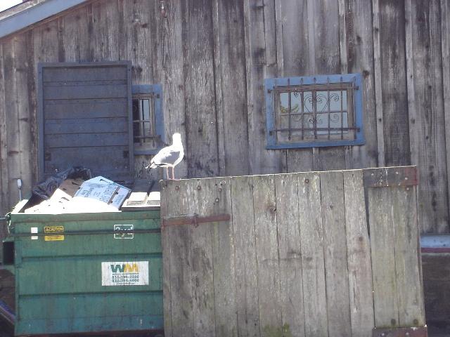 Dumpster Fandango 090517