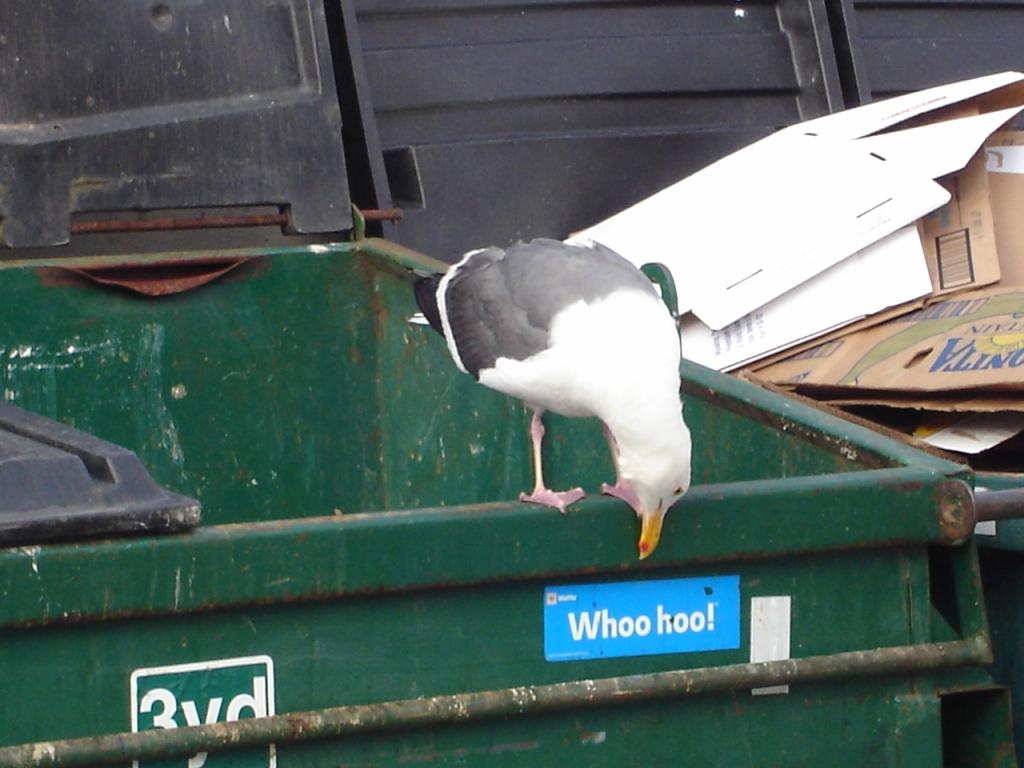 Dumpster Zocalo 080820