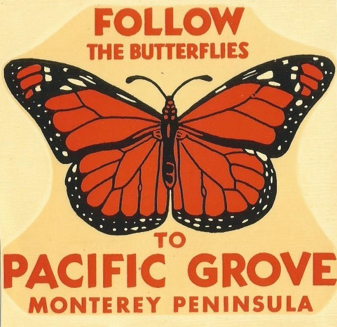 Follow The Butterflies