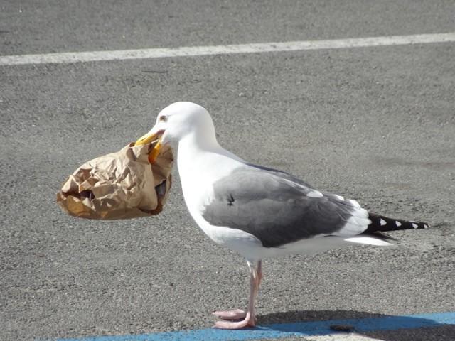 Gull At Brunch