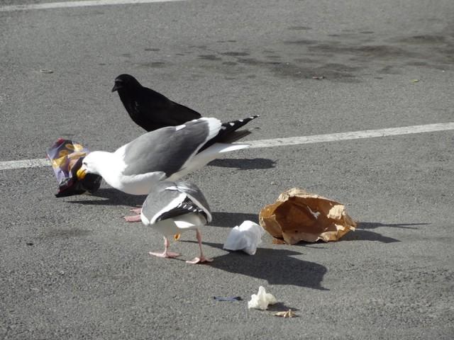 Gull Brunch Guests
