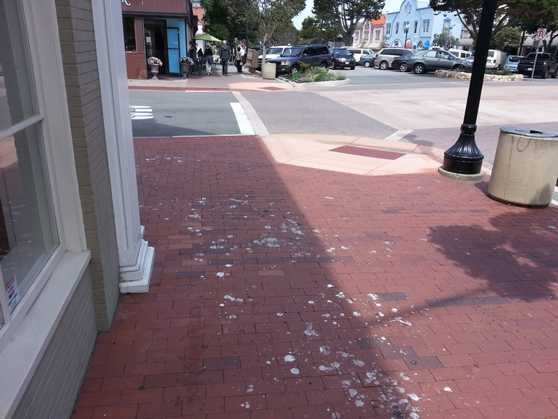 Gull Poop Chase Bank2014050