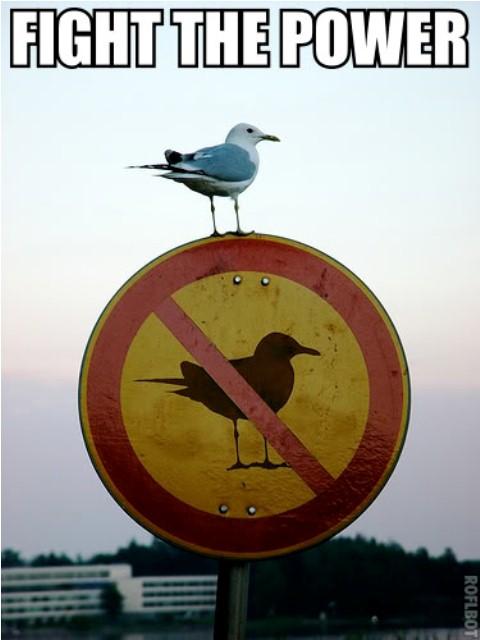 Gulls Fight The Power