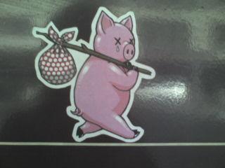Homeless Pig