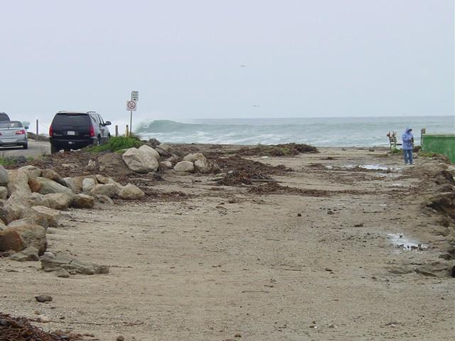 Kelp at Fog Horn1