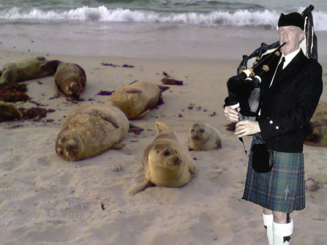 Seals And Bag Pipes
