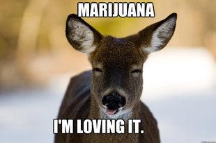 Stoned Deer
