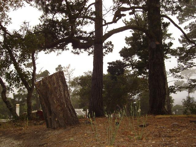 Stumps Platt Park