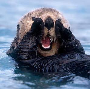 Suprised Sea Otter