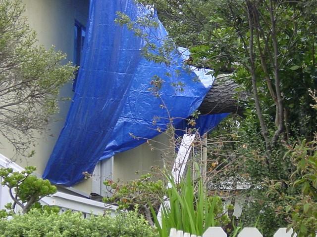 Tree On House 1