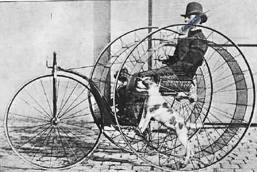 Trike Dog
