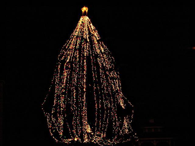 Ugly Tree 2006