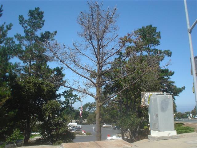 Arborist quit